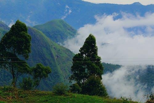 Kostnadsfri bild av dimmig morgon, indien, kall, november