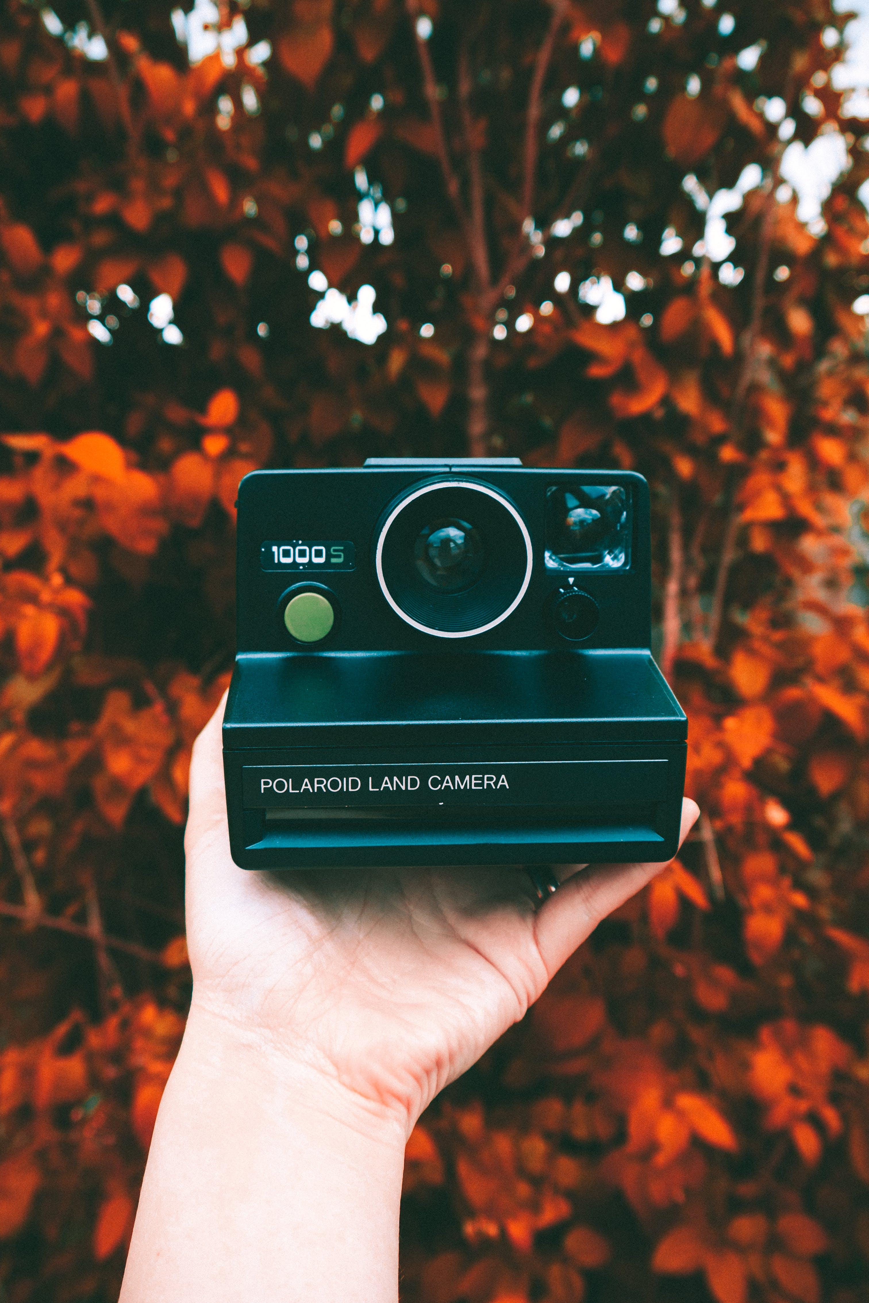 Fotobanka sbezplatnými fotkami na tému fotoaparát, historický fotoaparát, Polaroid, retro