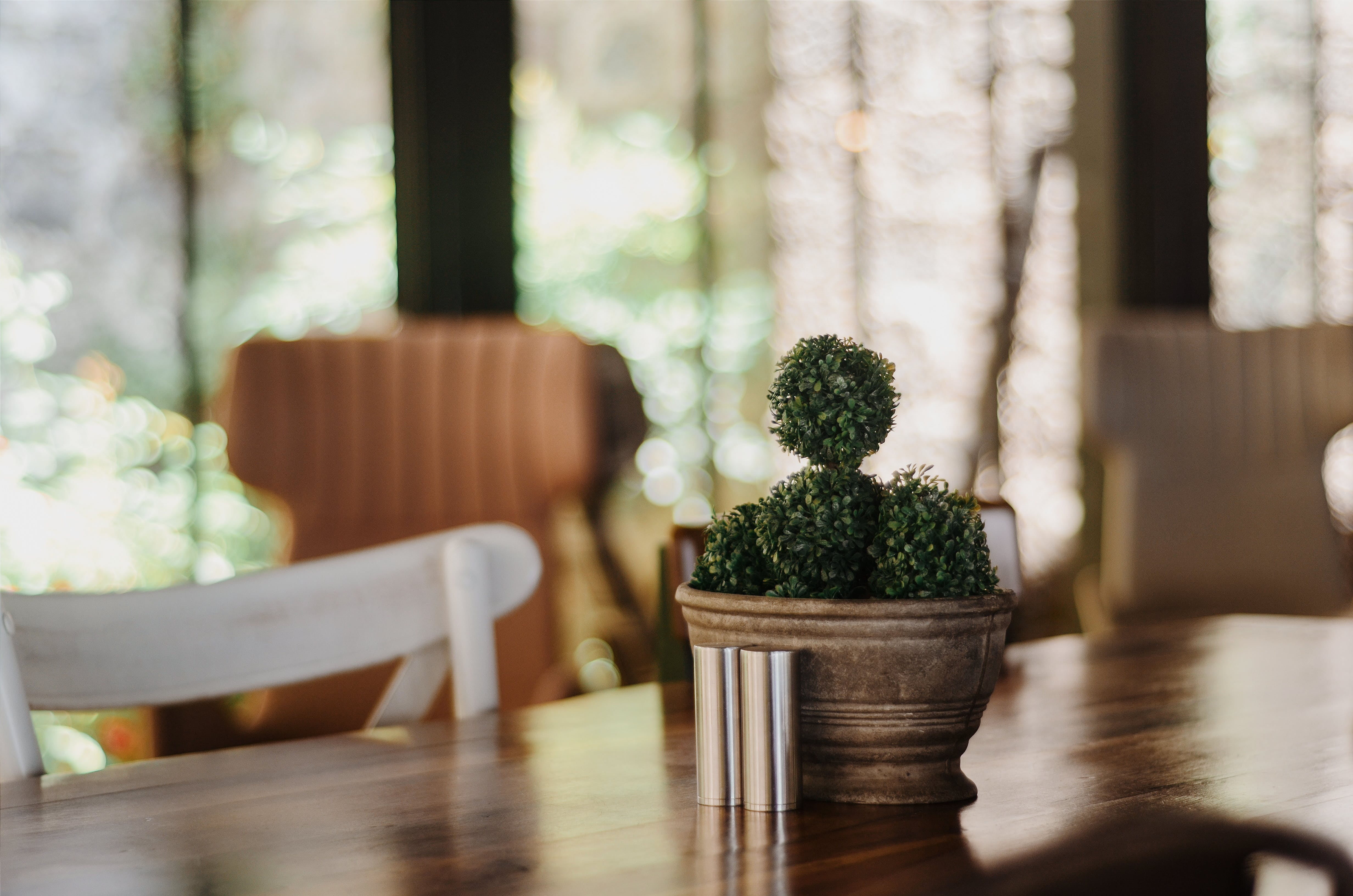 Green Cactus Plant on Table