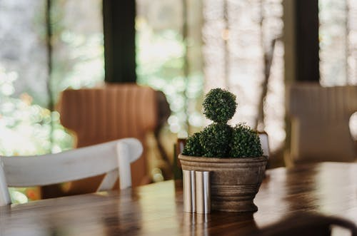 Gratis stockfoto met binnen, blad, bloem, cactus