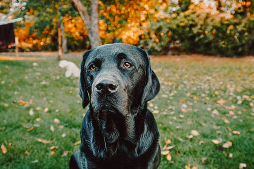 Close-Up Photo of Black Dog