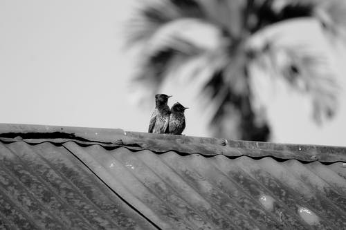 Grayscale Photo Of Birds On Roof