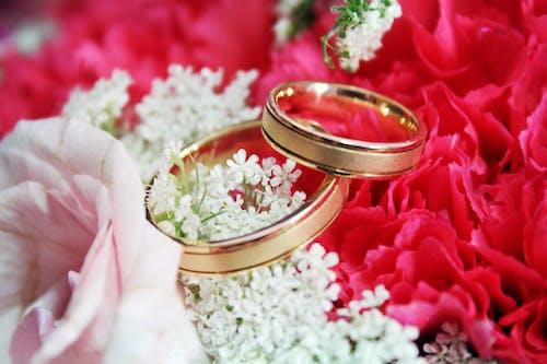 Free stock photo of ring, wedding rings