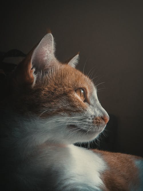 Základová fotografie zdarma na téma domácí mazlíček, domácí zvíře, fotografování zvířat, kočičí oko