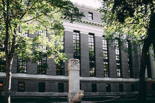 Ingyenes stockfotó ablakok, egyetem, építészet témában