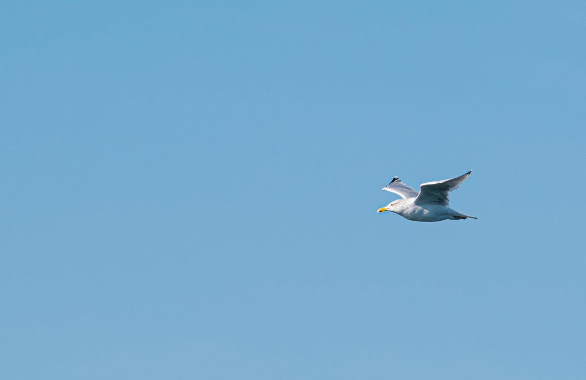 Photo of Flying Seagull