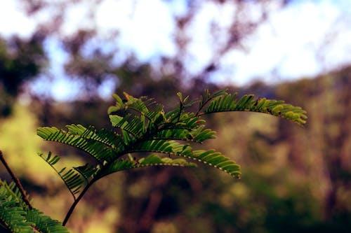 分支機構, 綠色, 葉子 的 免費圖庫相片