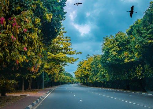Δωρεάν στοκ φωτογραφιών με άγρια φύση, δέντρα, δρόμος, ζωή στη φύση
