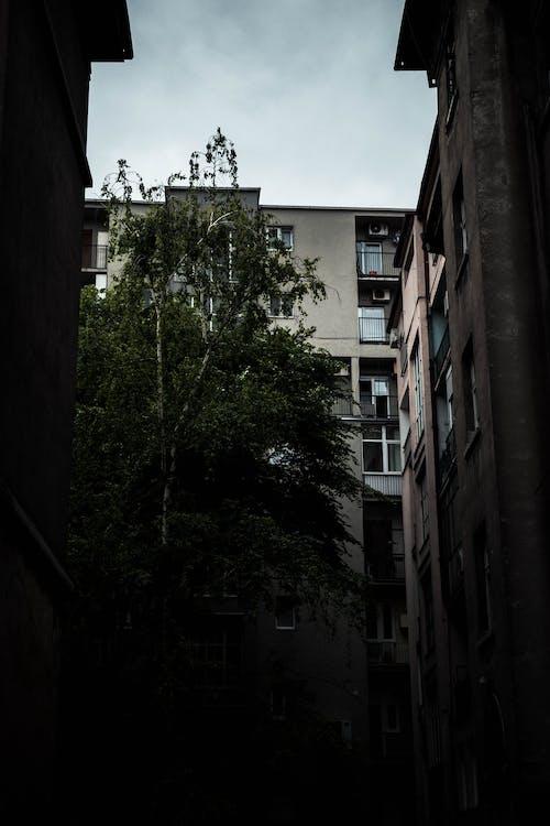 Foto d'estoc gratuïta de arbre, àrea urbana, arquitectura, carrer