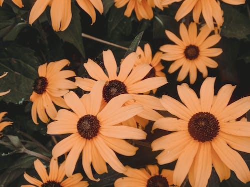 Free stock photo of amateur, beautiful, beautiful flower