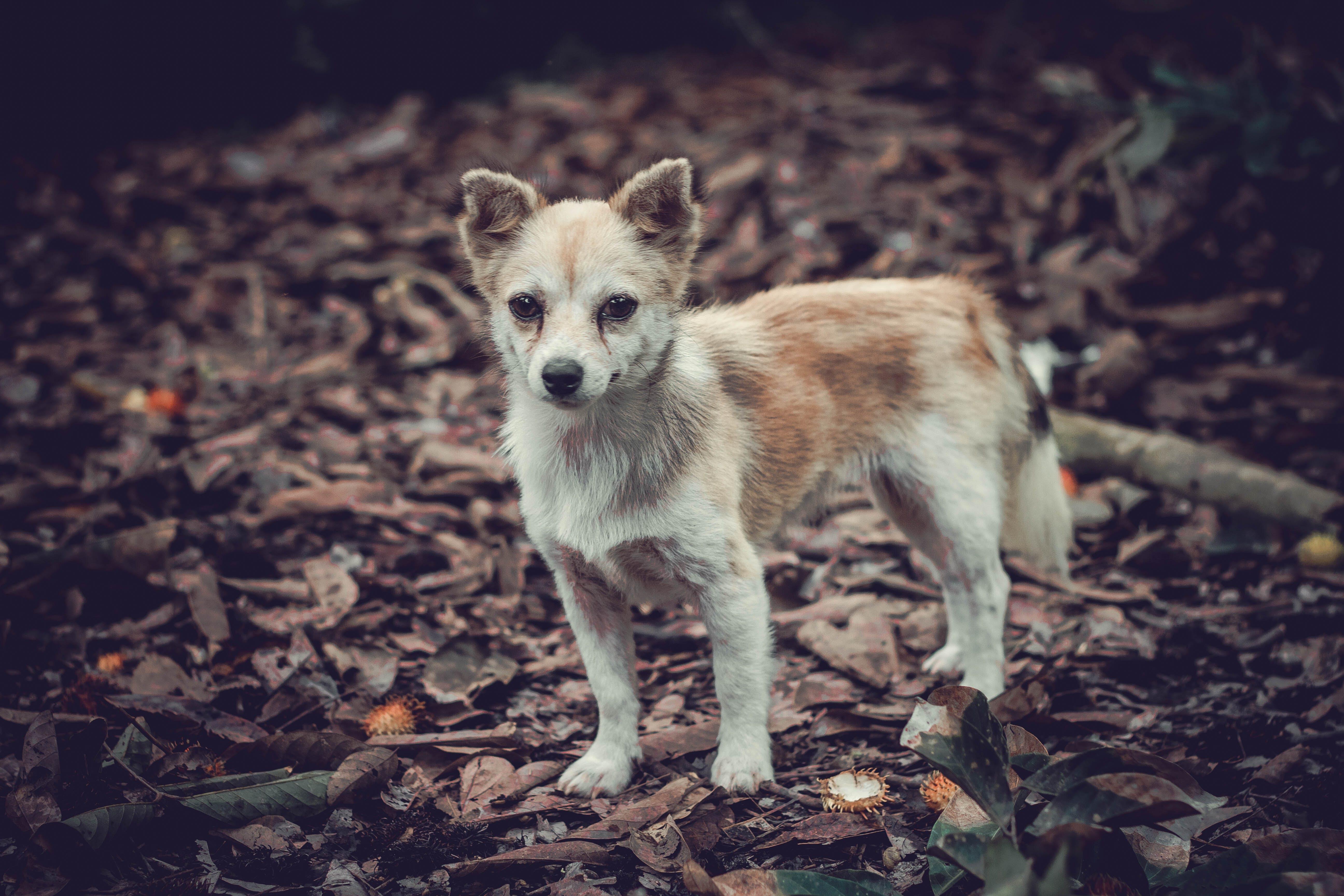 Základová fotografie zdarma na téma pes, roztomilý, zvíře