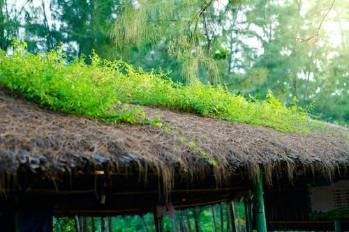 Kostenloses Stock Foto zu gras, sonnenuntergang, strand