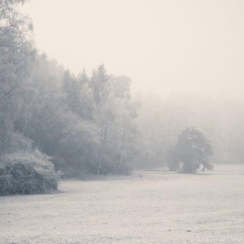 Darmowe zdjęcie z galerii z drzewa, krajobraz, las, mgła
