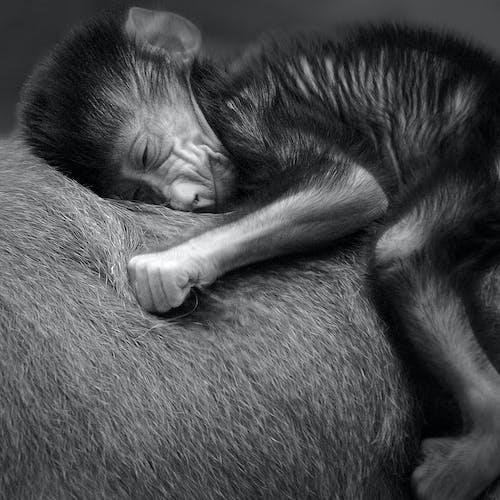 Darmowe zdjęcie z galerii z bezpieczny, czarno-biały, dziecko, jeżdżenie