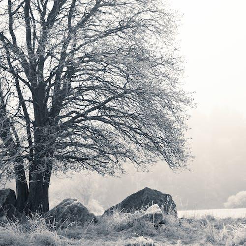 Darmowe zdjęcie z galerii z drzewo, kamień, krajobraz, mgła