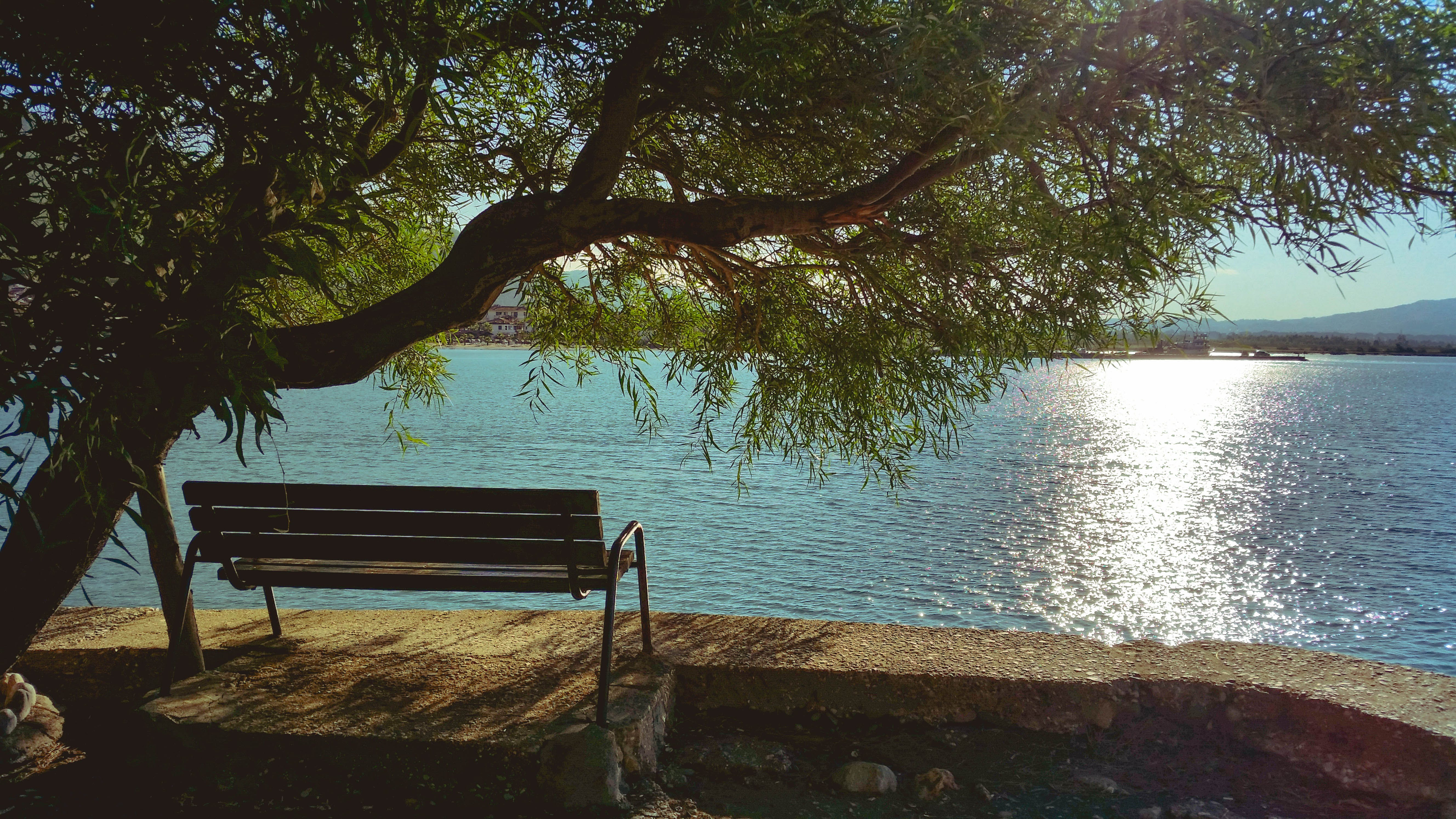 Bench Under Tree during Day Beside Body of Water