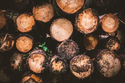 Ingyenes stockfotó fa, hasáb, közelkép, rönk témában