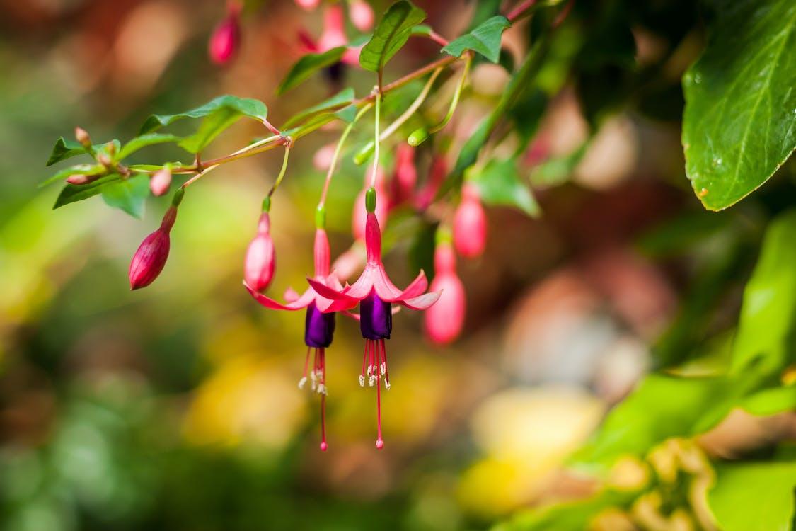 flowers, pink flower, pink flowers