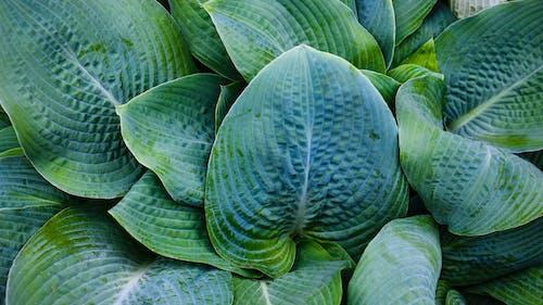 Základová fotografie zdarma na téma listy, rostlina, zahrada, zelená