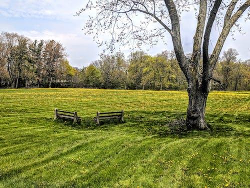 Fotobanka sbezplatnými fotkami na tému dva, hracie pole, lavičky