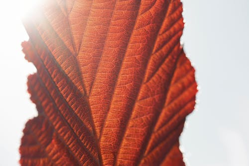 Free stock photo of close-up, detail, dry leaf, leaf