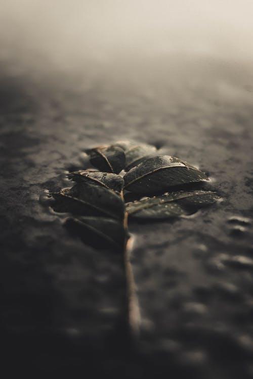 Ingyenes stockfotó levelek, mélységélesség, nedves témában