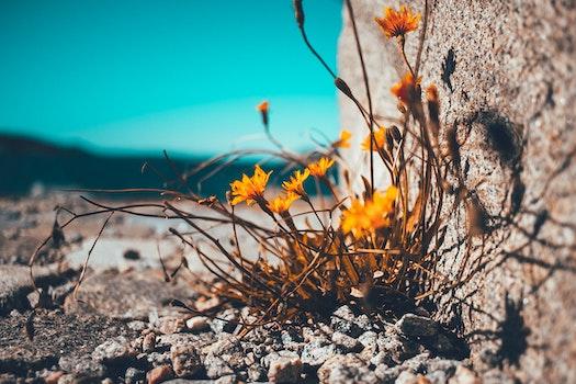 Kostenloses Stock Foto zu blumen, trocken, pflanze, blühen