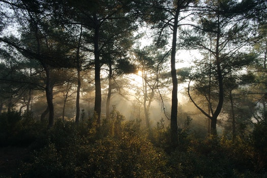 Free stock photo of nature, forest, trees, sunbeams