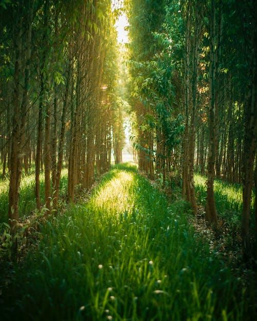 Kostnadsfri bild av anläggning, miljö, träd