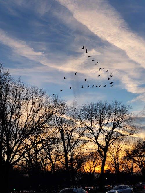 Gratis arkivbilde med fly, fugler, gyllen sol, kveld