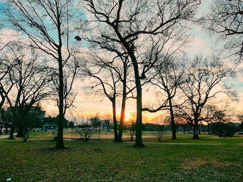 Gratis arkivbilde med blå himmel, grønt gress, gyllen sol, kveldshimmel