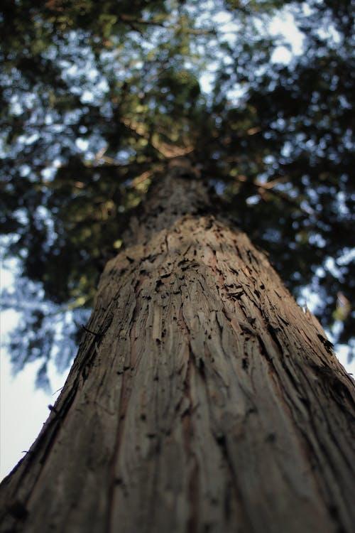森林, 樹, 自然美 的 免費圖庫相片