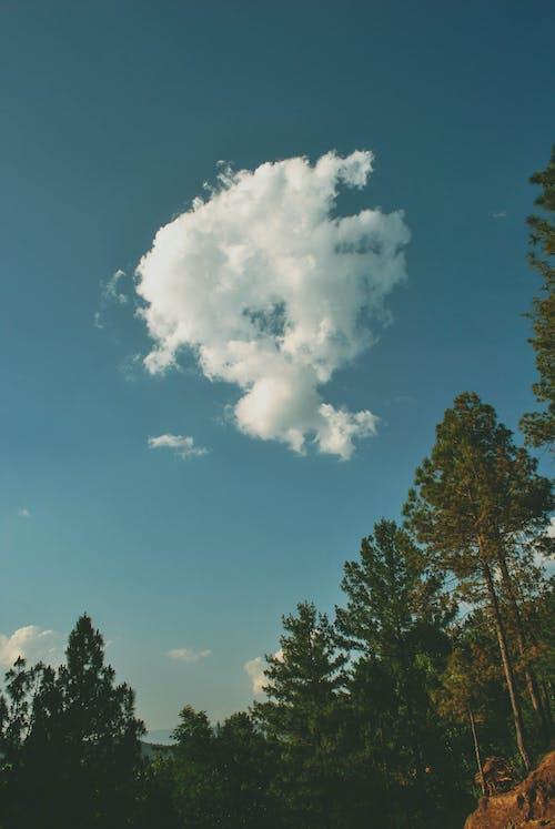 Darmowe zdjęcie z galerii z chmury, drzewa, drzewo iglaste, krajobraz