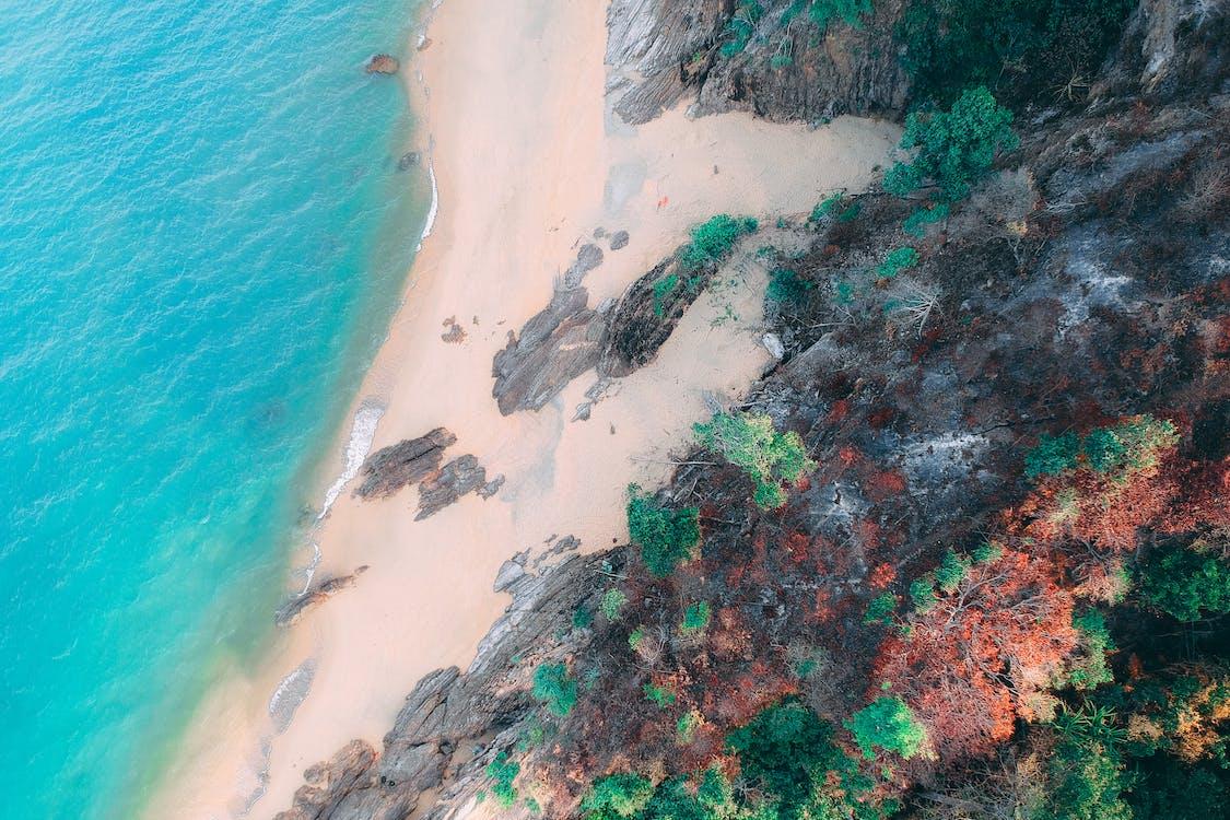 drónfelvétel, fák, festői