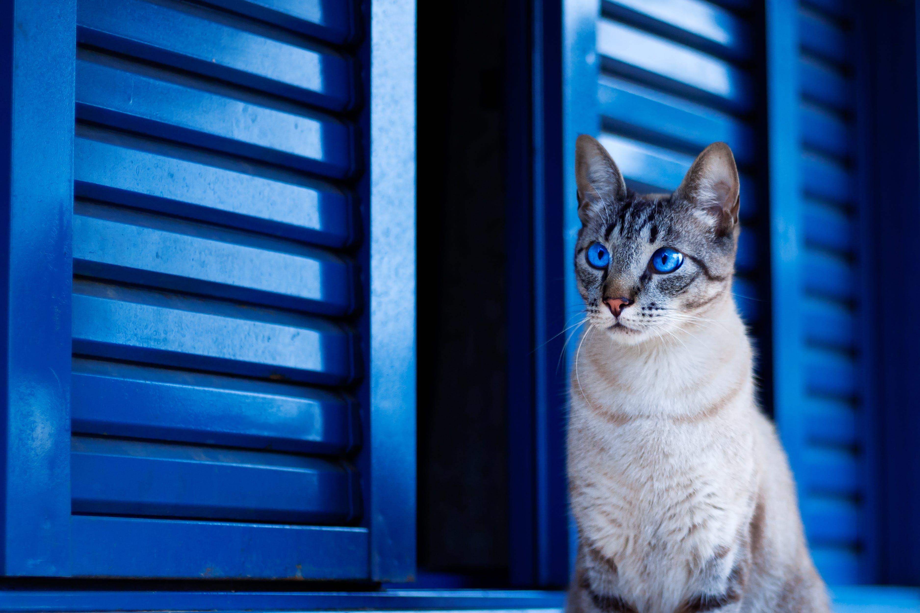Ảnh lưu trữ miễn phí về Bảo vệ, căn nhà, Chân dung, con mèo