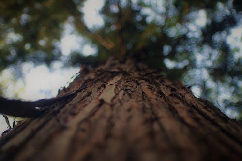 Foto d'estoc gratuïta de arbre, bellesa natural, bosc, natural