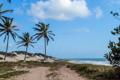 Foto stok gratis depan pantai, gubuk pantai, kursi pantai, laut pantai