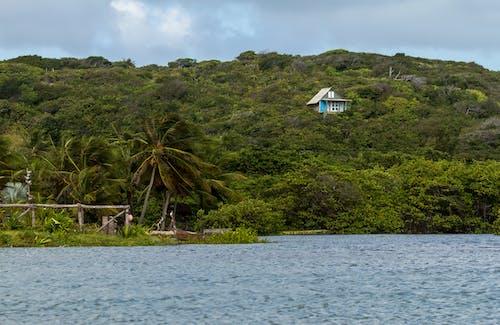 Foto stok gratis alam, depan pantai, gubuk pantai, kursi pantai