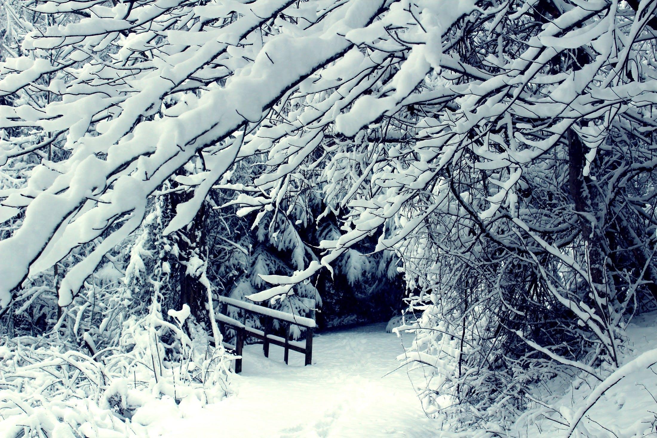 branches, cold, season