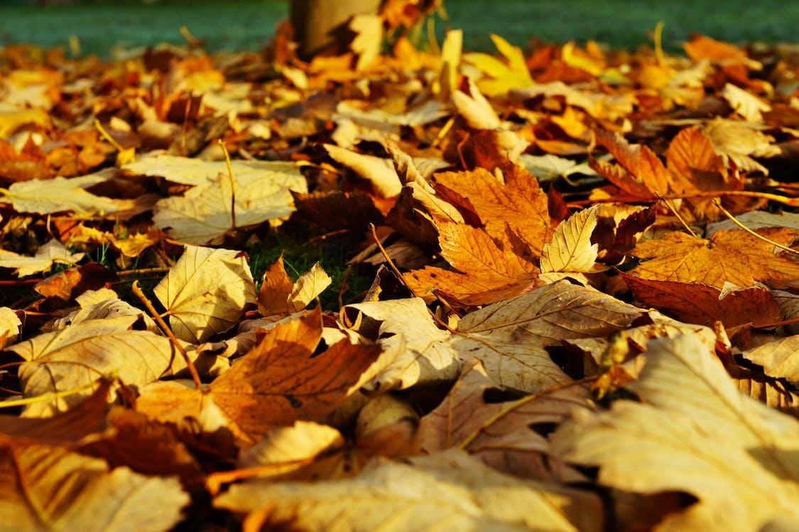 가을, 간, 건조한