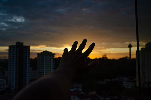 Left Human Hand in Silhouette Photography