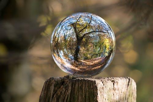 açık, ağaçlar, ahşap, bulanıklık içeren Ücretsiz stok fotoğraf