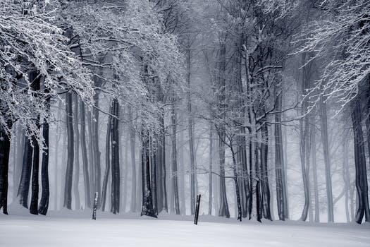 Free Stock Photo Of Cold Snow Black And White Landscape