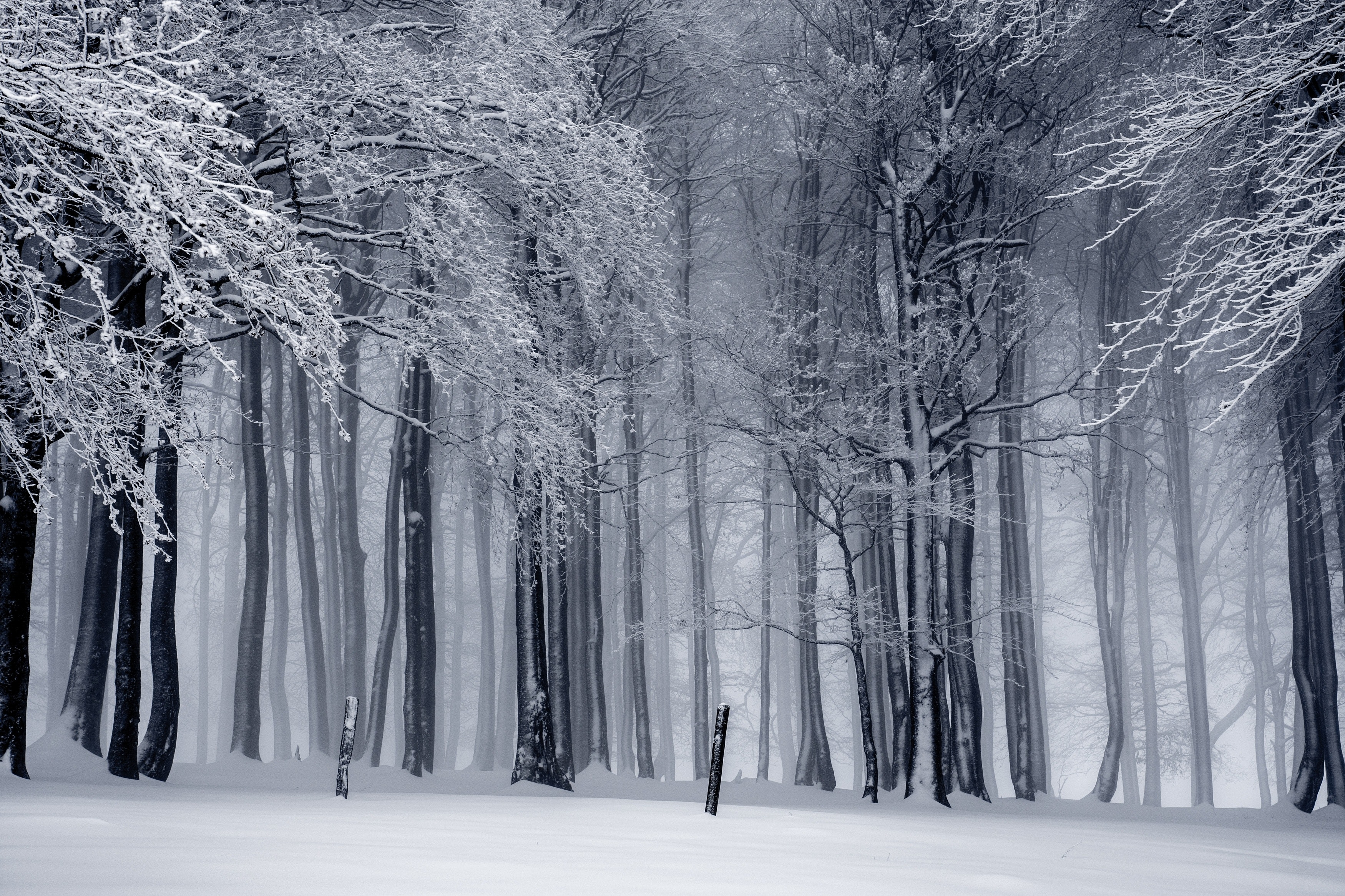 Snowy Forest Free Stock Photo