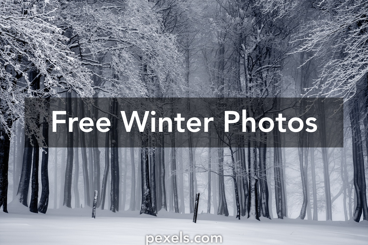 Winter In Black And White >> Winter Pictures Pexels Free Stock Photos