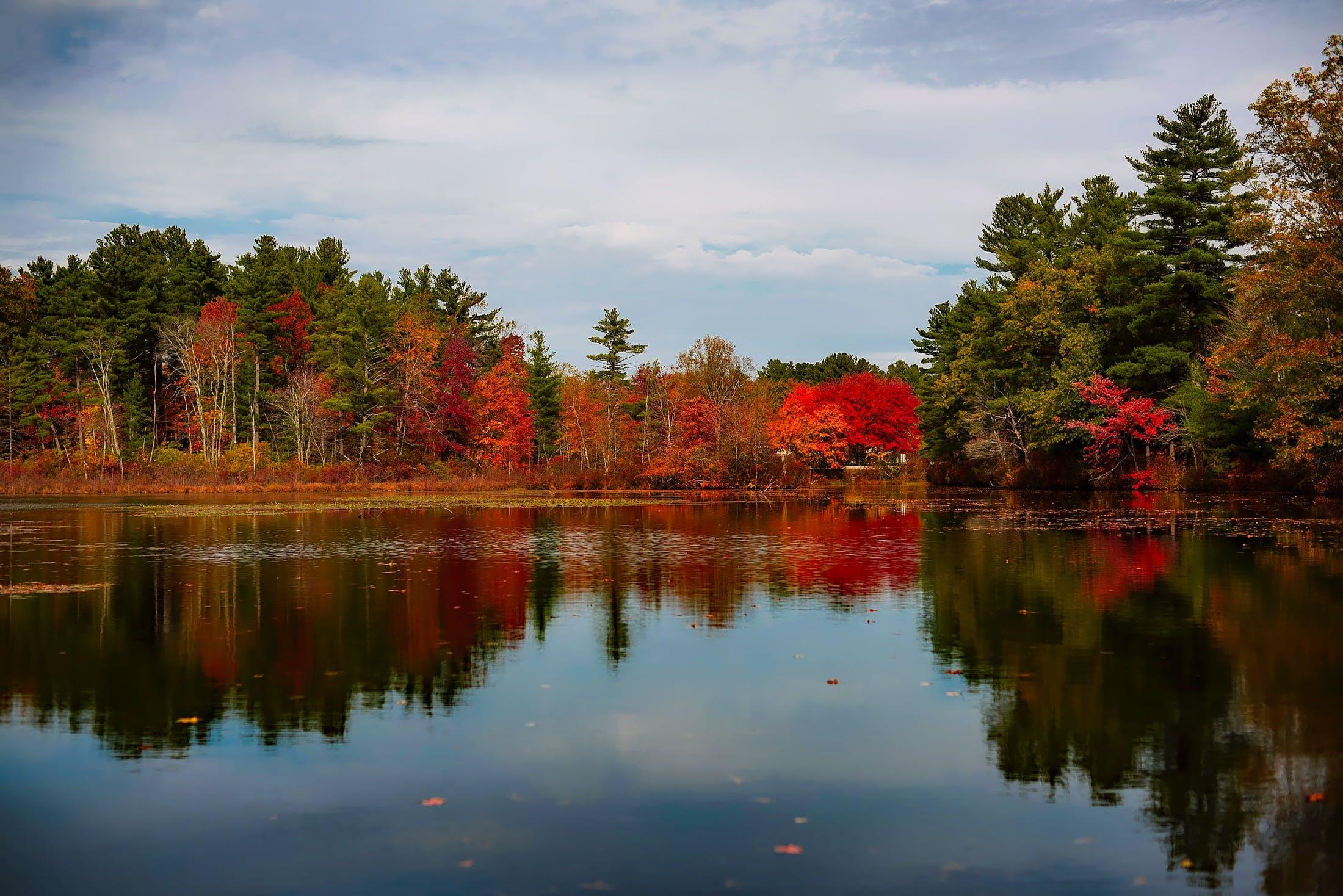 autumn, beautiful, bright