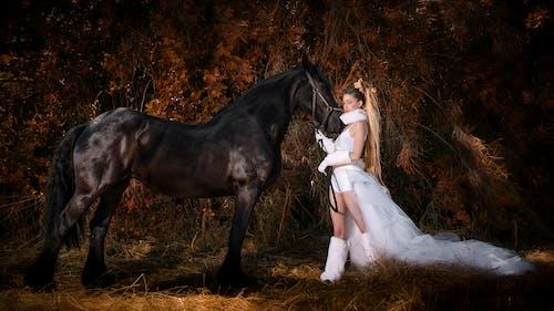 Fotos de stock gratuitas de caballo, pelo largo, piernas largas, selva