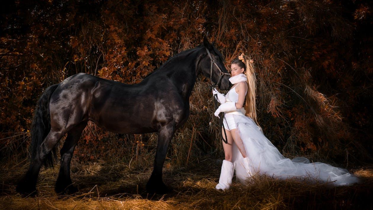 cavalier, cheval, cheveux longs