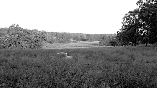 Gratis arkivbilde med bakkeskråning, bølgende åser, gressfelt, klar himmel
