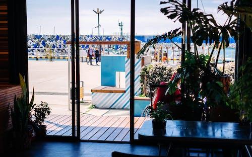 Ilmainen kuvapankkikuva tunnisteilla ikkunat, juomalasi, kasvit, katu